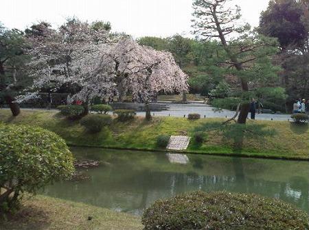 世界遺産 平等院の桜